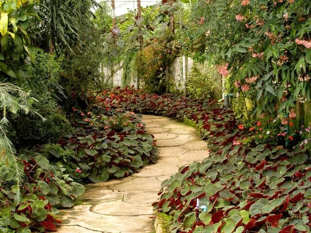 tuin planten zomerklaar maken